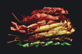 Einen bunten Mix bieten unsere Herbst-Events